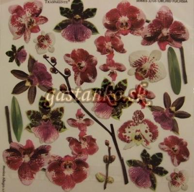 Orchid Fuchsia