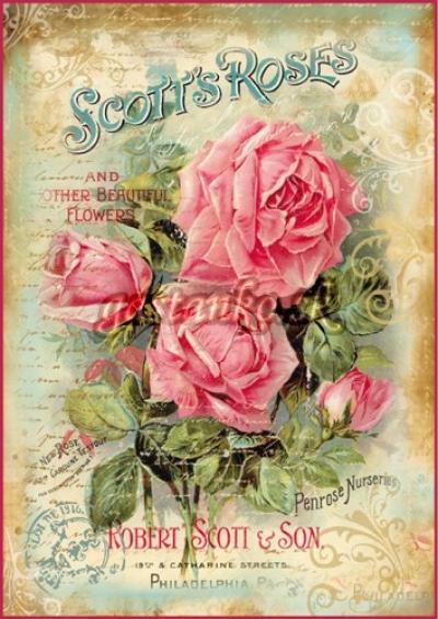 Nádherné ruže