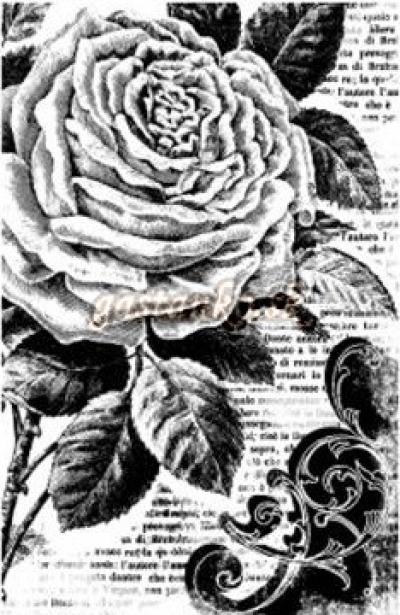 Pečiatka HD Ruža a písmo