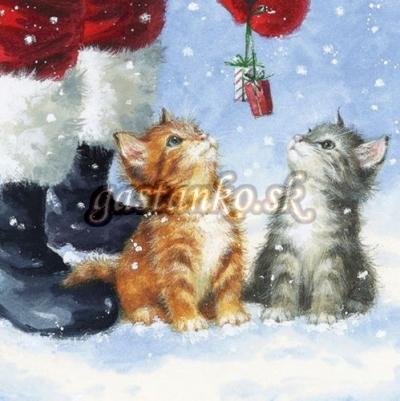 Darček pre mačiatka