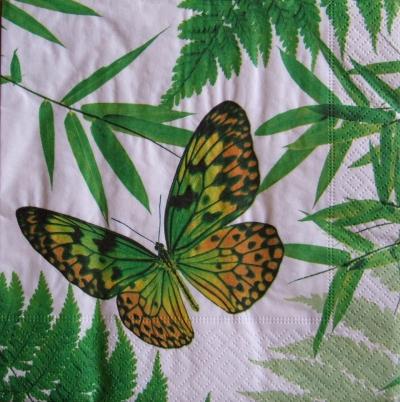 Oranžovo-zelený motýľ