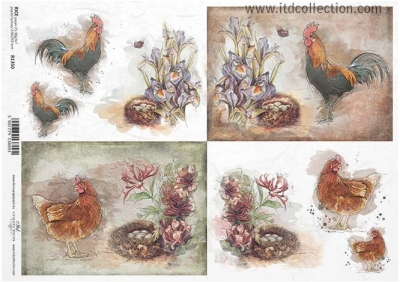 Sliepočky a kohútikovia pri hniezdach