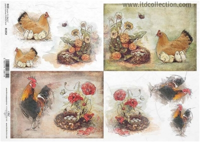 Sliepočky a kohútikovia pri hniezdach 2