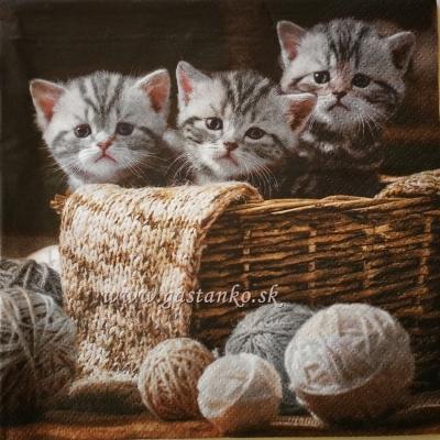Tri mačence v košíku