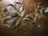 Lazúrový gél olivový so zlatými trblietkami
