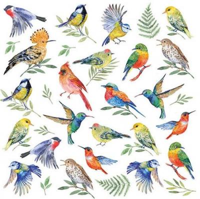 Drobné vtáčiky