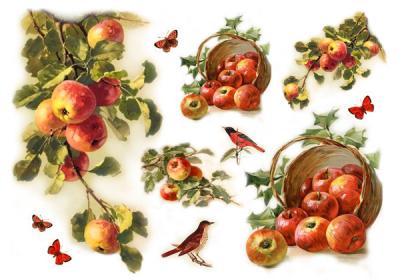 Úroda jabľčok