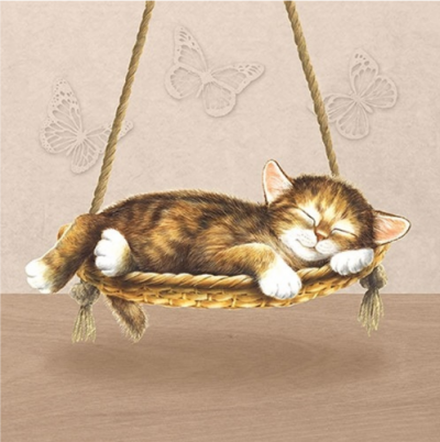 Snívajúce mačiatko