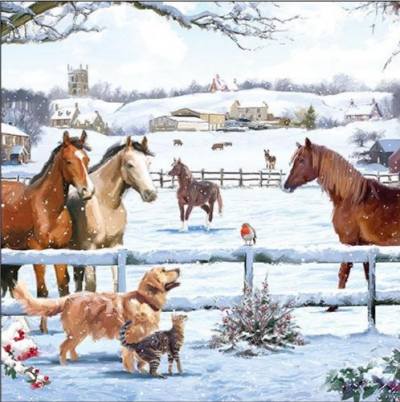 Kone v zime