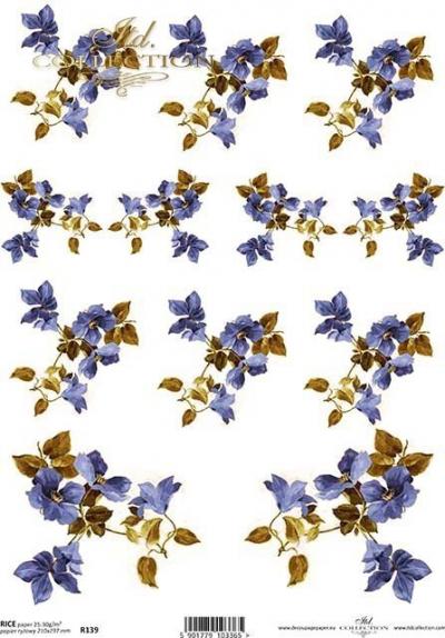 RP Drobný modrý clematis